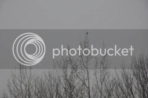 photo a3af14d2-b3e7-4d8d-ae98-4ddf9a1b1c9f_zpsa41f9dd6.jpg