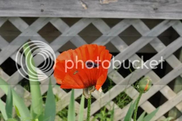 photo DSC_0175_zps7c4089c4.jpg