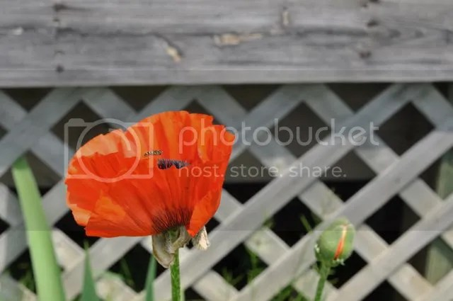 photo DSC_0177_zps5f9220b5.jpg