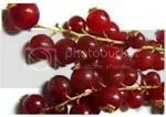 buah masam