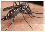 chikungunya, jaga lidah, jaga perkataan