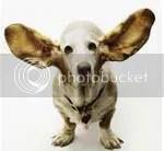 telinga untuk mendengar