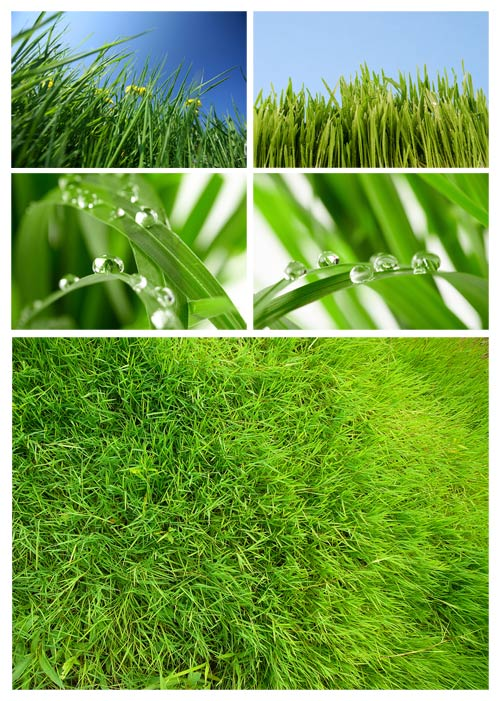 Green Flowers Leaves and grass