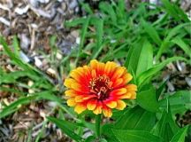 What is Blooming in Your Garden - August 2011 - Part 1