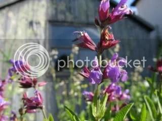 herb,garden,june