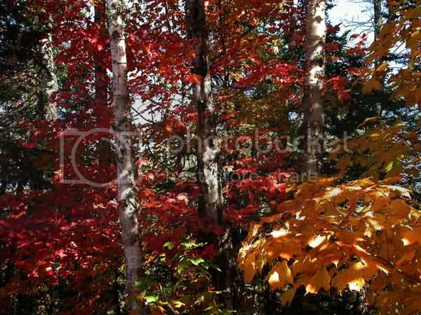 Seven Birches - Stephanie M. DAigle