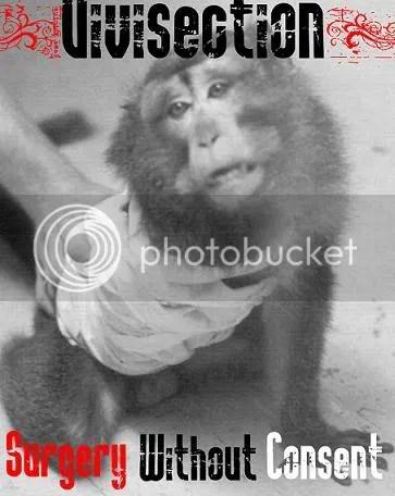 https://i0.wp.com/i28.photobucket.com/albums/c243/andihaze/Animals/VivisectionSURGERYWITHOUTCONSENT.jpg