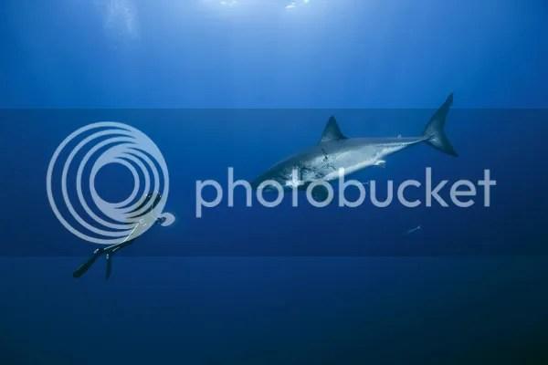 La Vita Negli Oceani