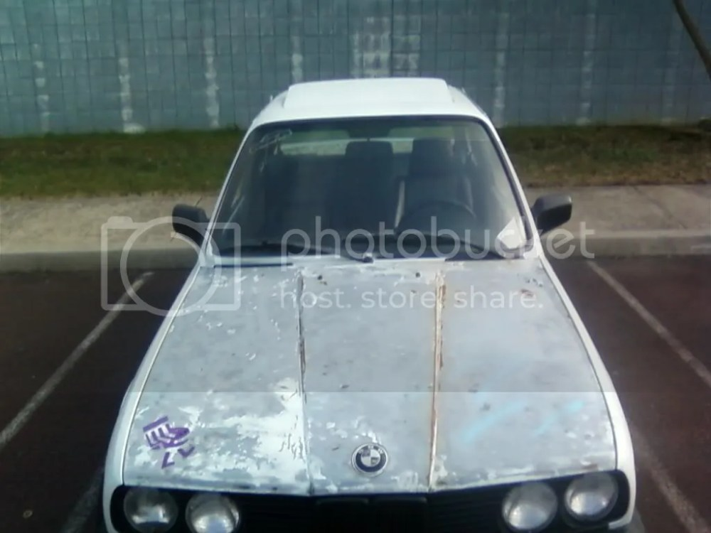 medium resolution of the only problem with this car is the hood and it doesnt have a cat it will still pass inspection with historic tags being that its a 84