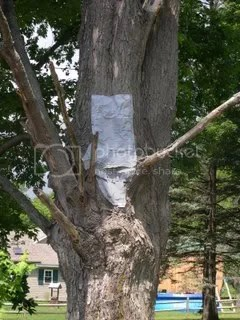Duct Taped Tree2