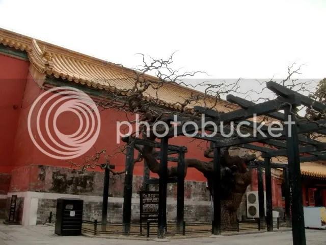 Imperial Garden, the Forbidden City