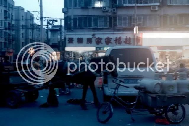 Horse on the Street of Peking