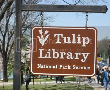 Tulip Library2