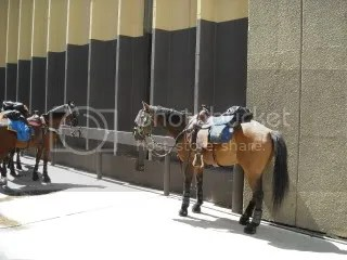 Horses in riot gear