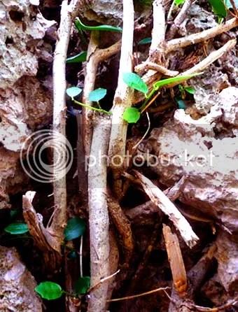 plant against rock