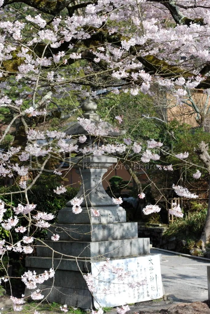 Looking at the lantern through the blossom
