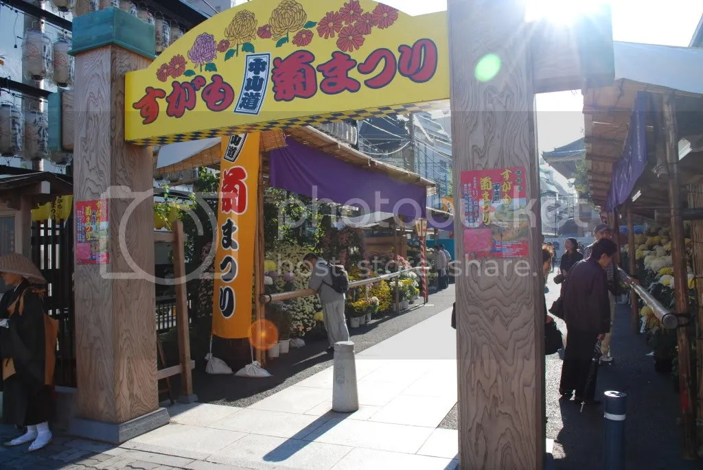 place selling flowers