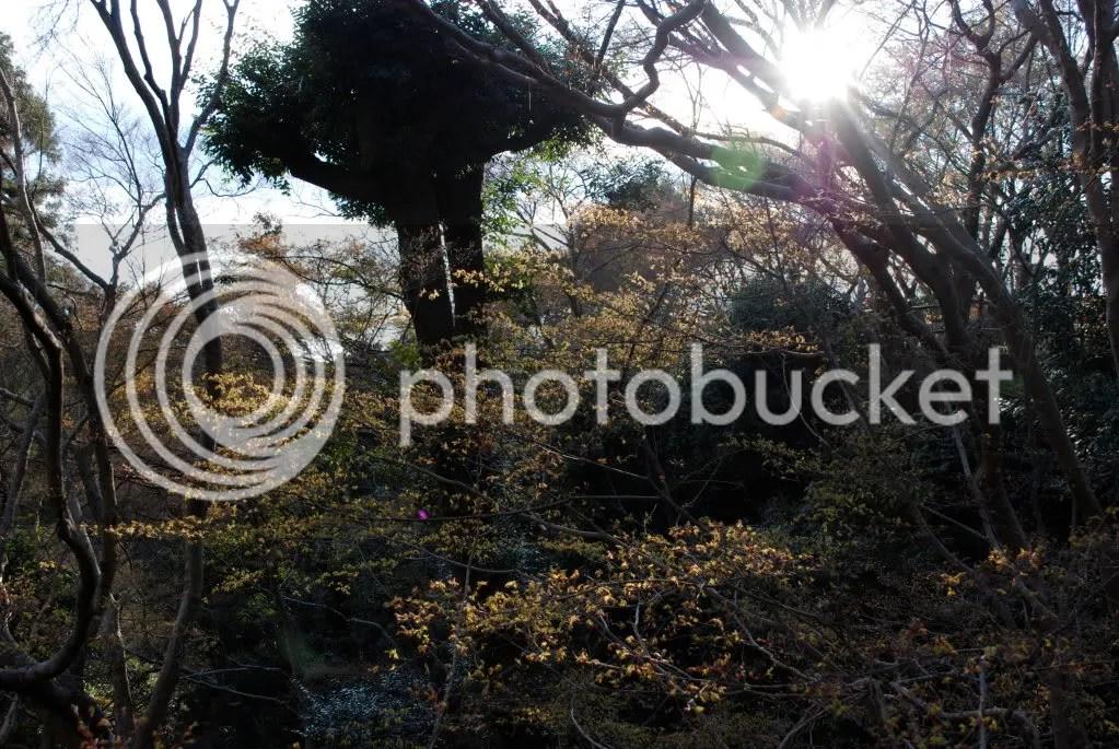 Greenery at Kiyomizu