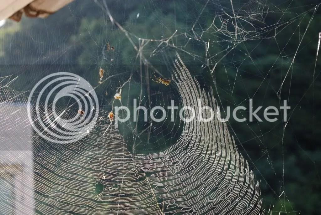 Spiderweb 1