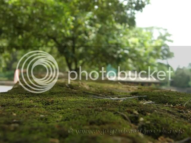 Thành rêu (Lăng Tự Đức - Huế)
