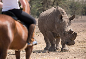 Riding with rhinos on Ol Pejeta Conservancy