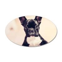 French Bulldog Wall Decals | French Bulldog Wall Stickers ...