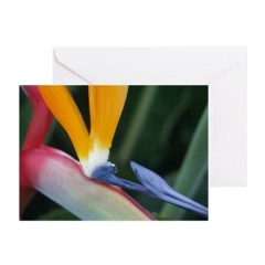 San Juan Capistrano Greeting Cards (Pk of 10)