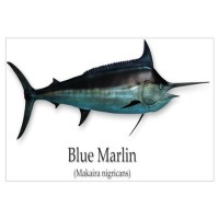 Blue Marlin Wall Art