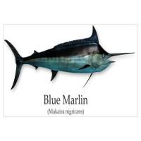 Blue Marlin Wall Art | Blue Marlin Wall Decor