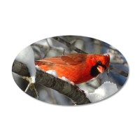 Snow Cardinal Wall Decal by picsofnature