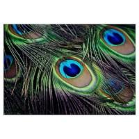Peacock Feather Wall Art | Peacock Feather Wall Decor