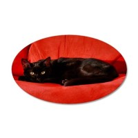 Black Cat Wall Decal by HisRuinPhotography