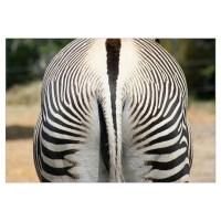 -Zebra Wall Decal