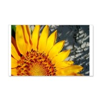 Sunset Sunflower Wall Decal by shards_sunflowr