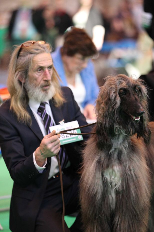 Dogs that look like their owners from Crufts 2012  Mirror Online