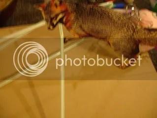 little fox climbs a linear spacial structure