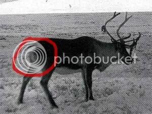 reindeerbuns