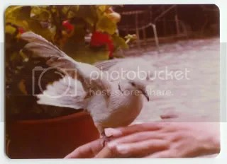 1977 photograph of scott and his pet bird