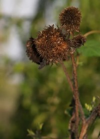 Stash Amassed Beyond Life Expectancy: Autumn garden photos