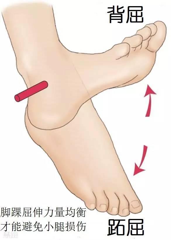為什麼跑步小腿會痛 ——脛骨內側應力綜合徵完全康複方案 - 壹讀