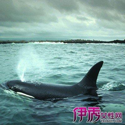 鯨魚交配過程 兩種分類教你辨別鯨魚的品種 - 壹讀