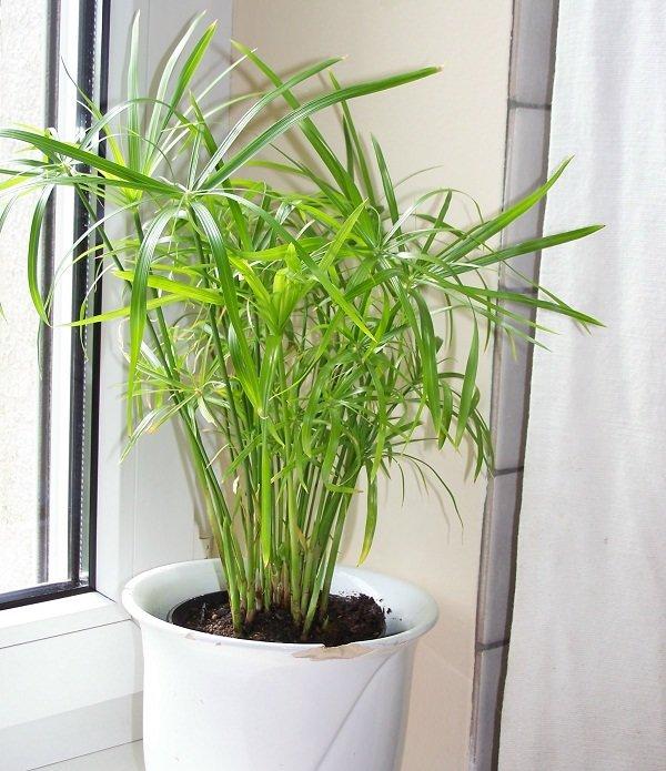 17種不需要陽光也能養的室內植物,你有哪些? - 壹讀