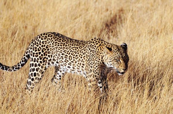號稱非洲五霸的非洲動物是哪些? - 壹讀