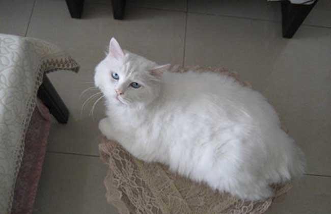 貓咪身上有跳蚤怎麼辦 教你幾招去除貓咪跳蚤 - 壹讀