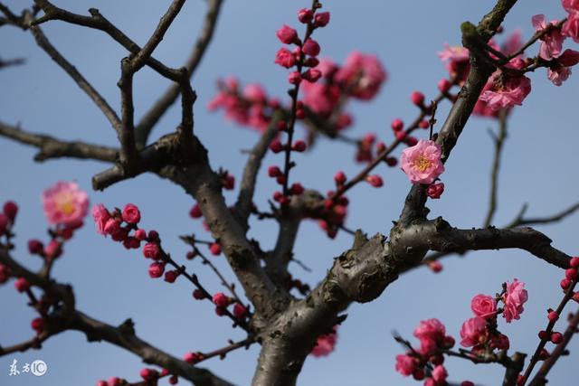 想要好風水自家院裡不能種的樹有哪些? - 壹讀