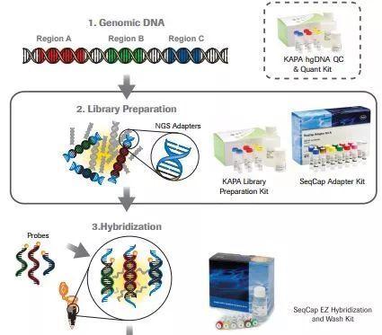 2017年度聚焦:DNA測序深度分析 - 壹讀