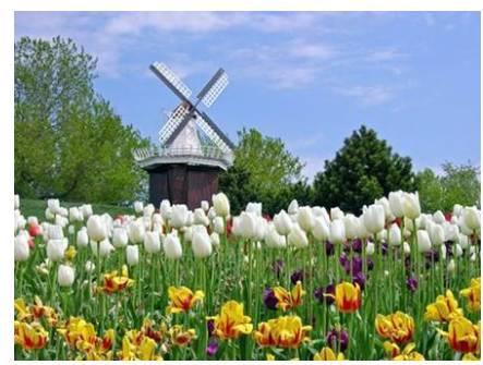 荷蘭花卉產業的成功經驗 - 壹讀