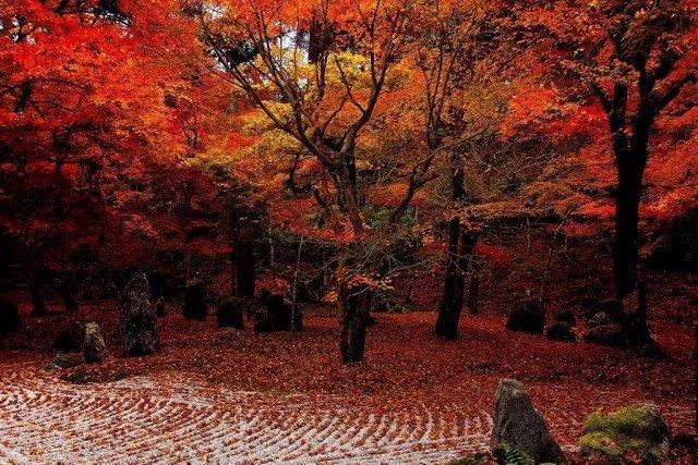 這 15 處九州名所才是日本人心中的賞楓秘境 - 壹讀