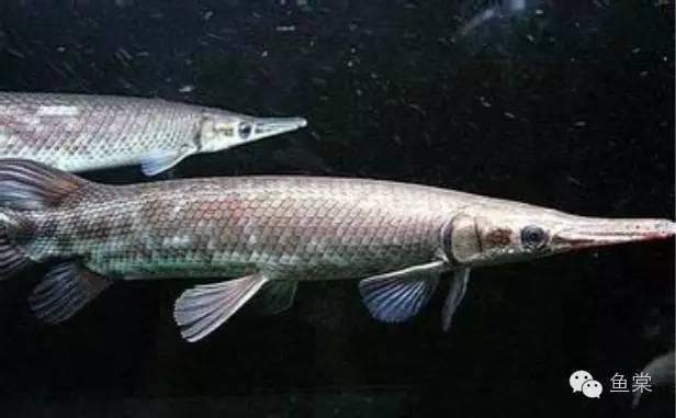 這25種觀賞魚能活多久。你造麼? - 壹讀