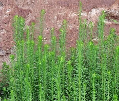 路邊最常見的野花野草,你能認出幾個? - 壹讀